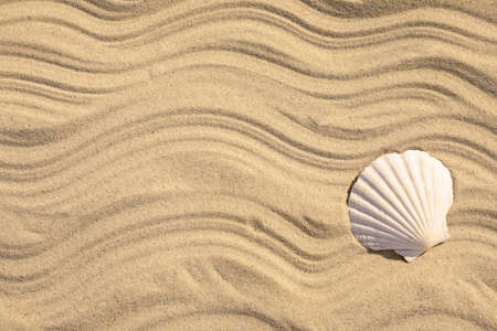 Seashell on beach sand with wave pattern, top view. Space for text