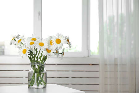 Vase with beautiful chamomile flowers on table in room. Space for text