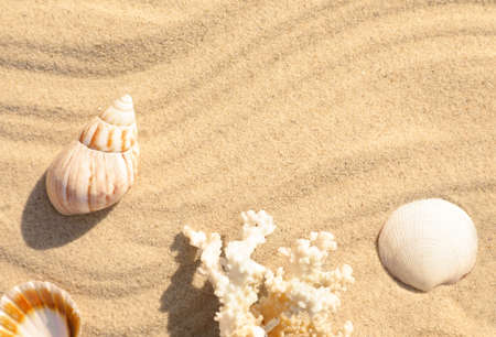 Seashells and coral on beach sand with wave pattern. Space for text