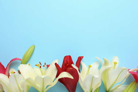 Beautiful fresh lily flowers on blue background, flat lay. Space for text Stockfoto - 128781259