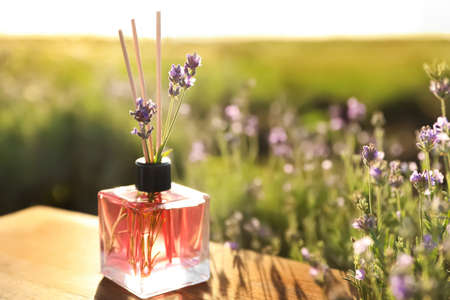 Reed air perfume with oil and fresh lavender flowers on wooden table in blooming field. Space for text