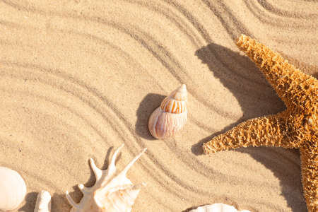 Seashells and starfish on beach sand with wave pattern, flat lay. Space for text 写真素材