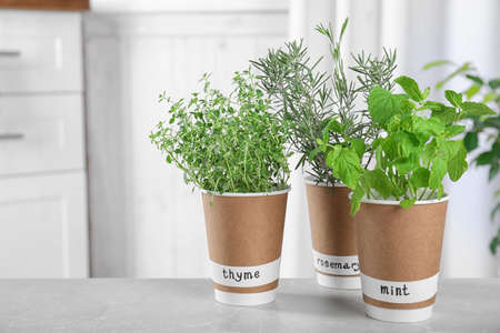 Seedlings of different aromatic herbs in paper cups with name labels on light grey marble table Zdjęcie Seryjne