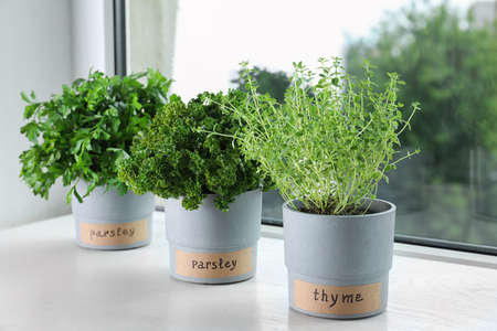 Seedlings of different aromatic herbs in pots with name labels on white wooden window sill