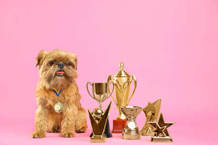 Cute Brussels Griffon dog with champion trophies and medal on pink background