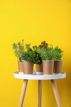 Seedlings of different aromatic herbs in paper cups on white table near yellow wall