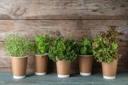 Seedlings of different aromatic herbs in paper cups on blue table near wooden wall