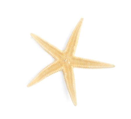 Beautiful starfish on white background, top view. Beach object