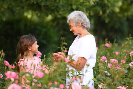 Little girl with her grandmother near rose bushes in garden Standard-Bild - 129175209