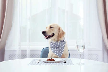 Cute funny dog sitting at served dining table indoors Zdjęcie Seryjne