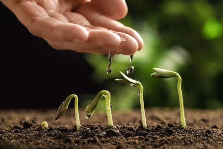 Woman watering little green seedlings in soil against blurred background, closeup view