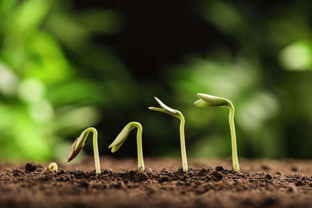 Little green seedlings growing in soil against blurred background, closeup view