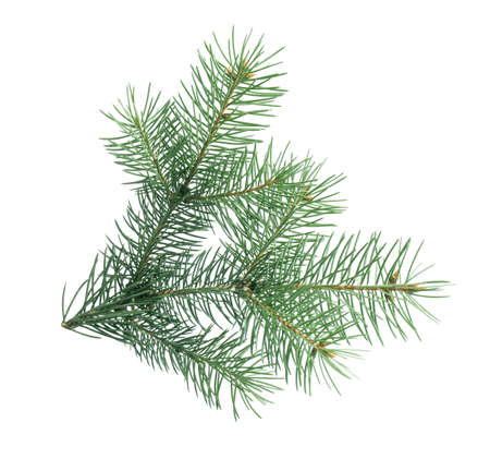 Branch of Christmas tree on white background Imagens - 128833185