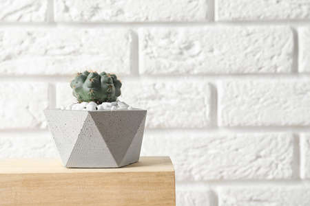 Beautiful succulent plant in stylish flowerpot on wooden table near white brick wall, space for text. Home decor Stock fotó