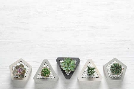Beautiful succulent plants in stylish flowerpots on white wooden background, flat lay with space for text. Home decor 免版税图像