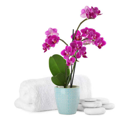 Composition with orchid in flowerpot and spa stones on white background