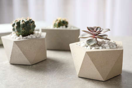 Beautiful succulent plants in stylish flowerpots on table indoors. Home decor