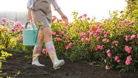 Mujer con regadera cerca de rosales al aire libre, primer plano. Herramienta de jardinería
