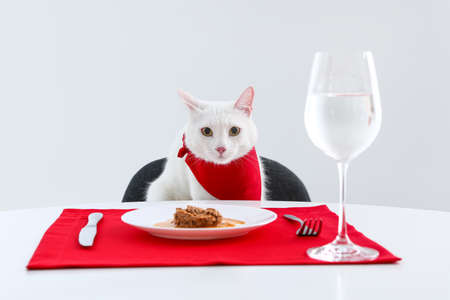 Cute cat sitting at served dining table against white background