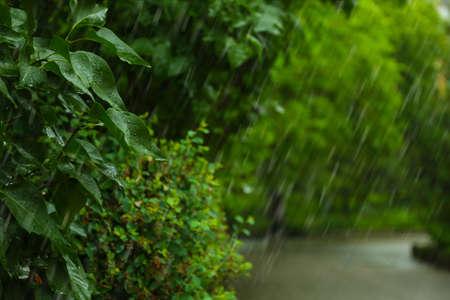 Vista de fuertes lluvias torrenciales en el parque verde Foto de archivo
