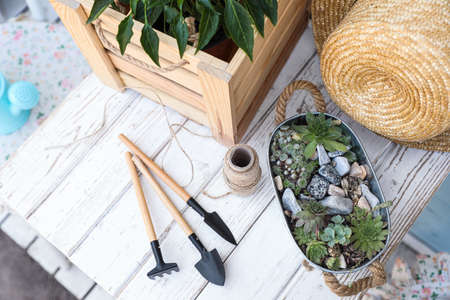 Composition with gardening tools and plants on white wooden table, above view
