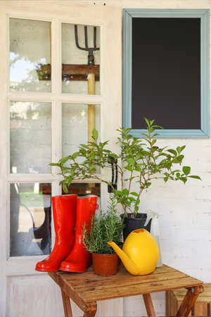 Potted plants, rubber boots and watering can on wooden table near house. Gardening tools Фото со стока