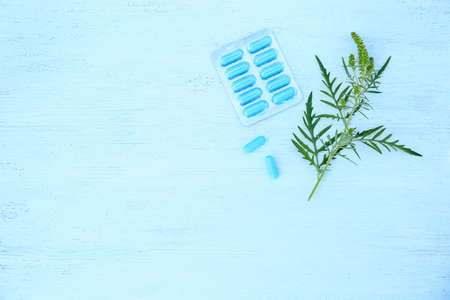 Ragweed (Ambrosia) branch and pills on blue wooden table, flat lay with space for text. Seasonal allergy