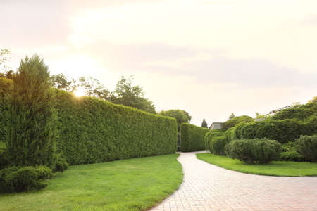 Picturesque landscape with brick path on sunny day. Gardening idea