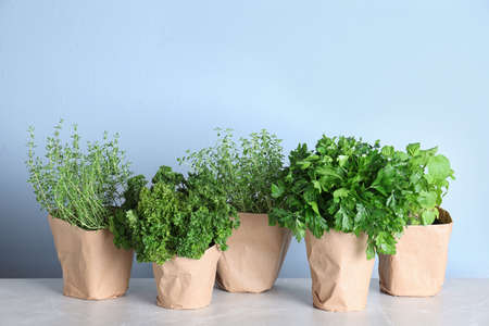 Seedlings of different aromatic herbs in paper wrapped pots on light grey marble table