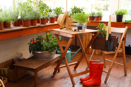 Seedlings, rubber boots and gardening tools in shop Фото со стока