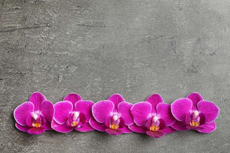 Beautiful orchid flowers on grey stone background, flat lay. Space for text