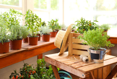 Seedlings, wooden crate, straw hat and rope on wooden table in shop, space for text. Gardening tools Фото со стока