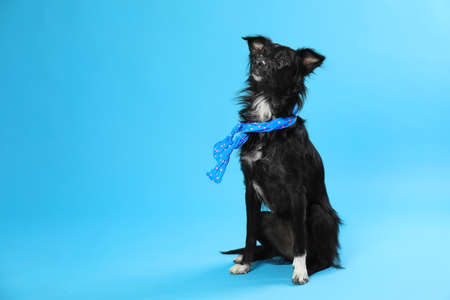 Cute dog with scarf on blue background. Space for text