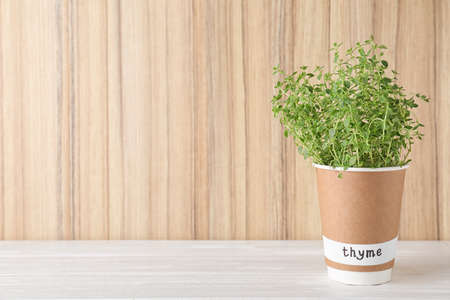 Seedling of fresh thyme in paper cup with name label on white table near wooden wall. Space for text