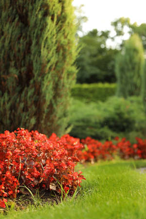 Picturesque landscape with beautiful flowerbed on sunny day. Gardening idea