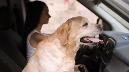 Funny Golden Labrador Retriever dog and young woman in modern car Foto de archivo - 129523396