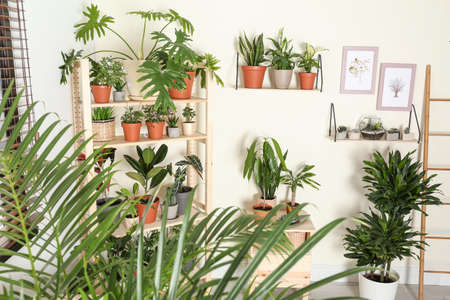 Stylish room interior with different home plants Stock fotó