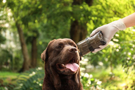 Detection Labrador dog sniffing pack with drugs outdoors