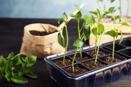 Vegetable seedlings in plastic tray on table 写真素材 - 129531833