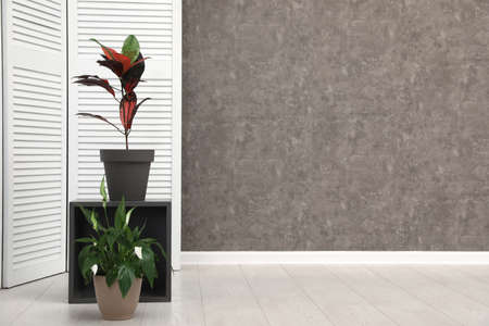 Room interior with indoor plants at grey wall. Trendy home decor