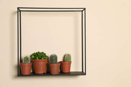 Shelf with potted plants on beige wall, space for text. Trendy home interior decor