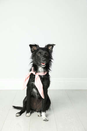 Cute black dog with neckerchief sitting near light wall in room Imagens