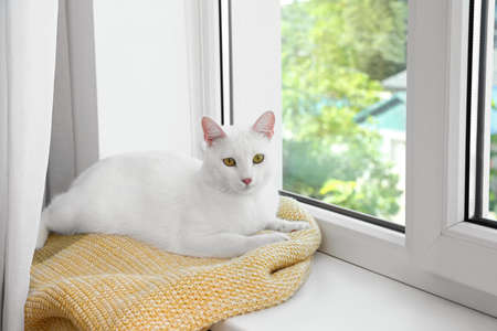 Cute cat on plaid at window indoors. Warm house concept