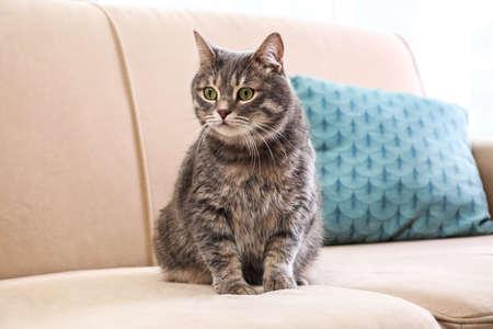 Cute gray tabby cat on sofa. Lovely pet