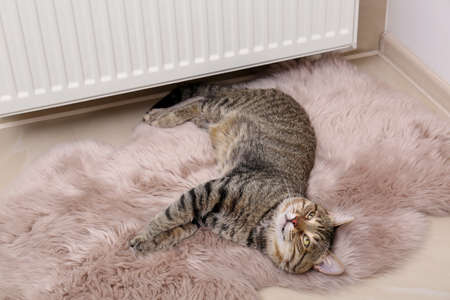 Cute tabby cat on faux fur rug near heating radiator indoors