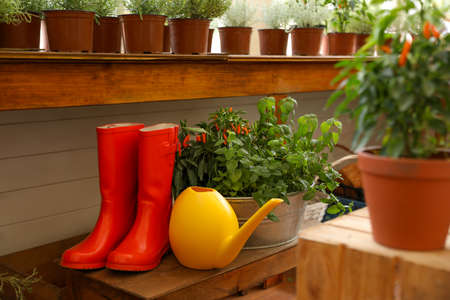 Seedlings, rubber boots and watering can indoors. Gardening tools