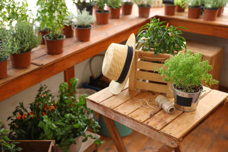 Seedlings, wooden crate, straw hat and rope on wooden table indoors. Gardening tools