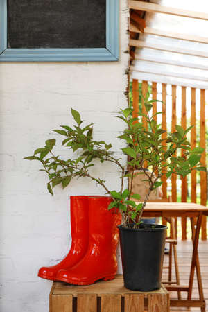 Rubber boots and potted plant on wooden crate near house. Gardening tools