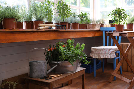 Different potted home plants and gardening tools in shop