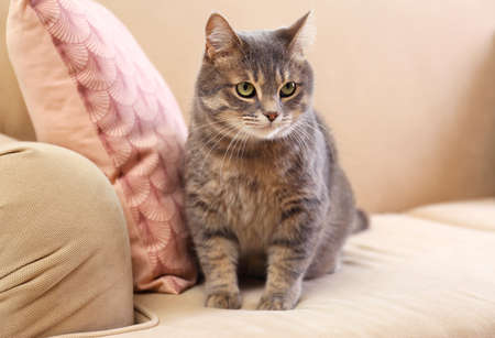 Cute gray tabby cat on sofa. Lovely pet Фото со стока
